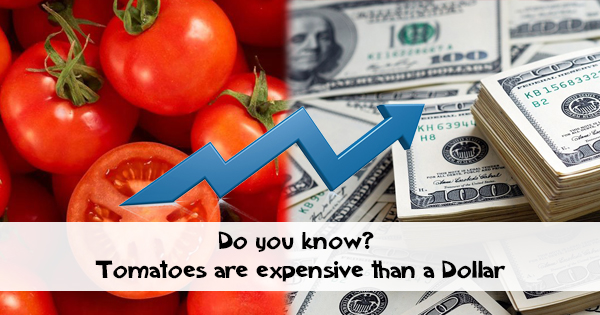 Tomatoes are likely to be expensive than a Dollar